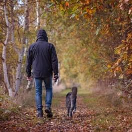 autumn-walk-1792812_640