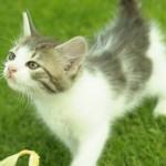 kitty-150x150